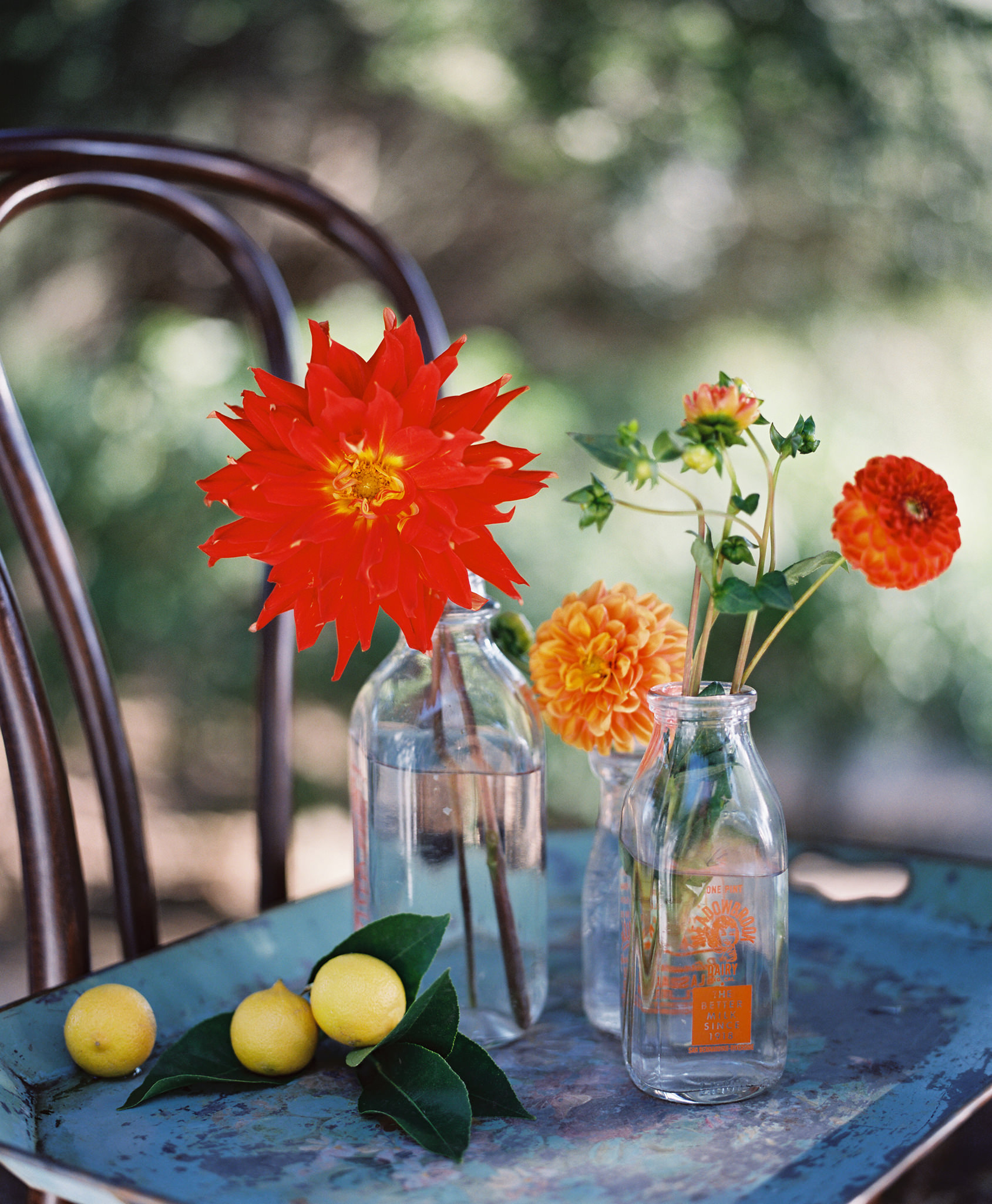 KarenWise-Farm-to-Table-Dahlias-Lg