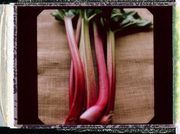 KarenWise_Rhubarb_Polaroid