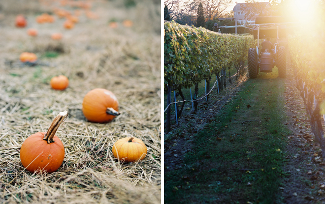 Pumpkin+Vineyard